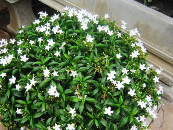 Vẻ đẹp thuần khiết của các loại hoa màu trắng